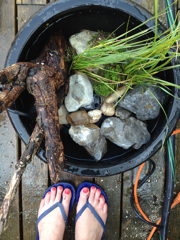 DIY: Make your own patio pond in a pot / The Sweet Escape