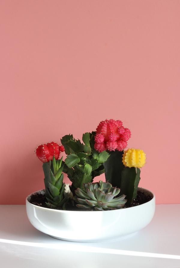 DIY Colourful Cactus & Succulent Garden / The Sweet Escape
