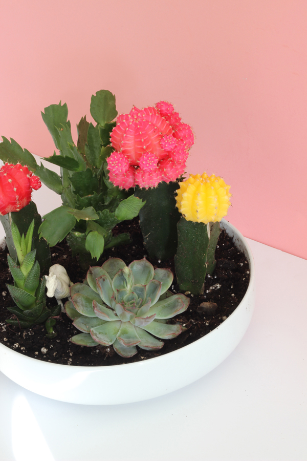 DIY Colourful Cactus U0026 Succulent Garden / The Sweet Escape