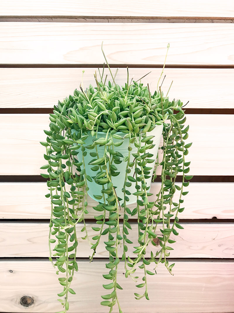 DIY Patio Plant Wall by The Sweet Escape #succulent