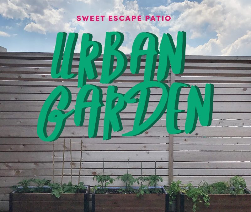Project Sweet Escape Patio: The Urban Garden